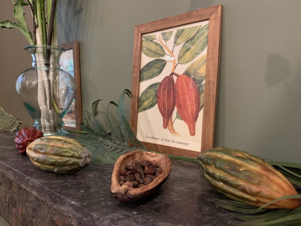 Cabosse fruit du cacaotier