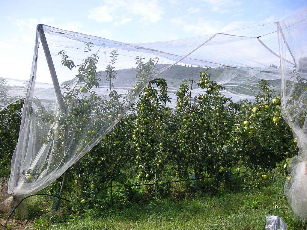 Vergers de pommes du Tarn-et-Garonne