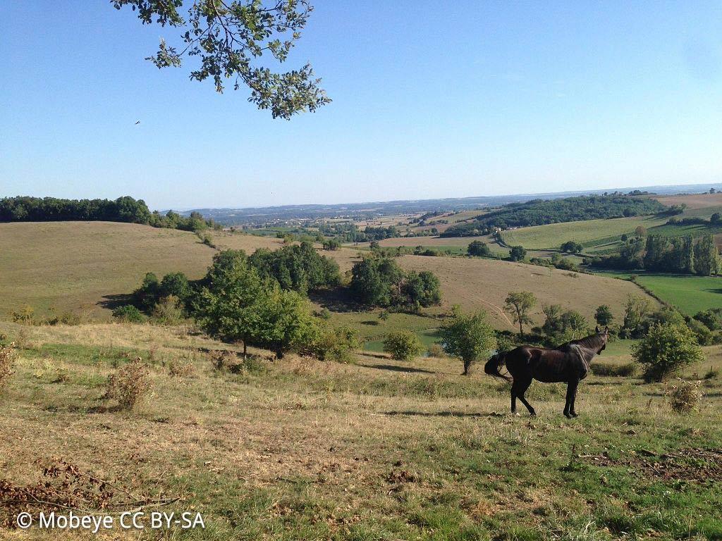 La nature à Lisle-sur-Tarn