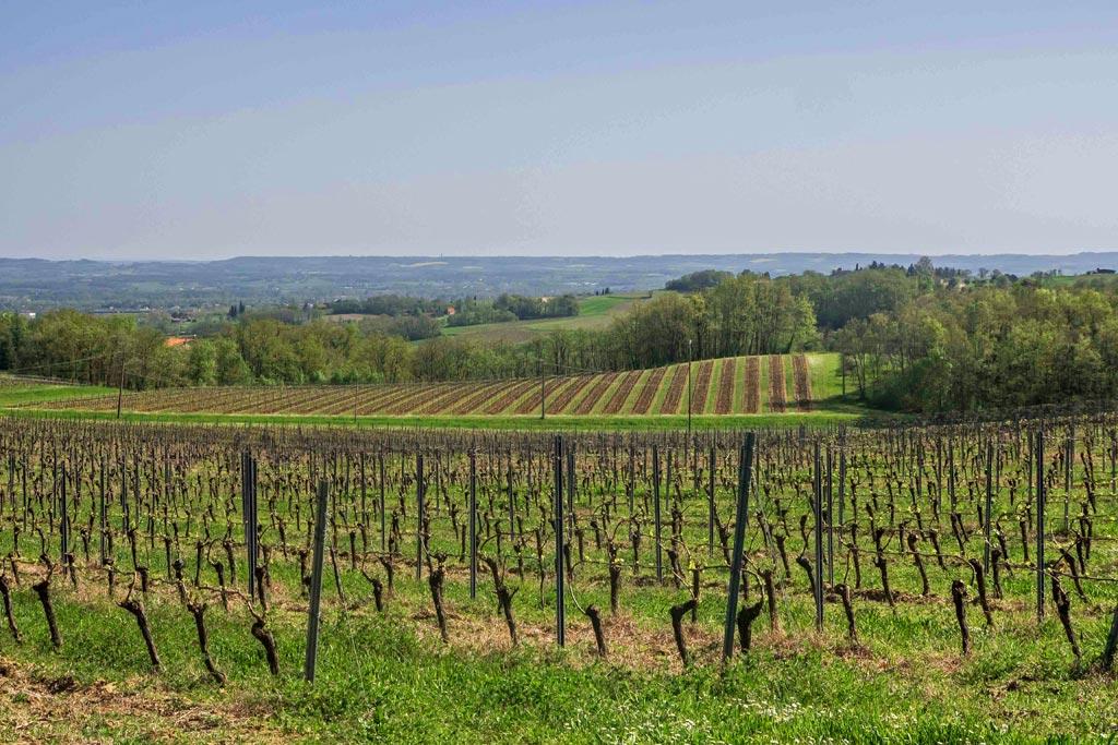 Les vignes de Gaillac, juste avant l'apparition des feuilles